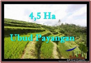 Beautiful UBUD BALI 45,000 m2 LAND FOR SALE TJUB533