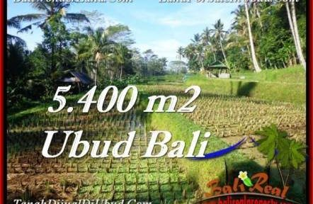 FOR SALE Affordable 5,400 m2 LAND IN UBUD TJUB554