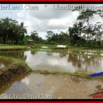 Beautiful PROPERTY 6,100 m2 LAND IN Ubud Pejeng FOR SALE TJUB547