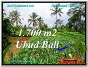 Exotic 1,700 m2 LAND IN UBUD FOR SALE TJUB560
