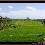 Beautiful 45,000 m2 LAND FOR SALE IN Ubud Payangan TJUB533