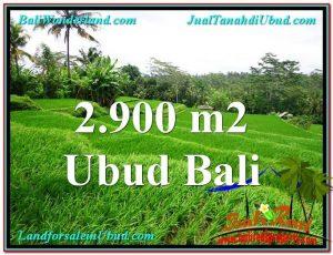 Affordable 2,900 m2 LAND SALE IN UBUD TJUB564