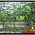 FOR SALE Exotic 4,800 m2 LAND IN UBUD BALI TJUB571