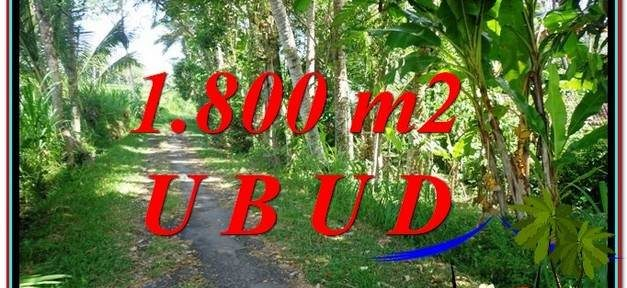 LAND SALE IN Ubud Payangan BALI TJUB597