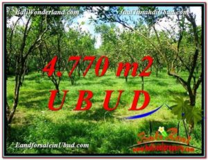 LAND FOR SALE IN Ubud Tegalalang BALI TJUB598