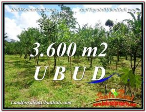 FOR SALE Affordable LAND IN Ubud Tegalalang BALI TJUB599