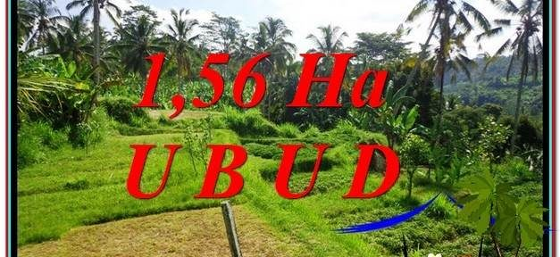 Magnificent UBUD BALI 15,600 m2 LAND FOR SALE TJUB601