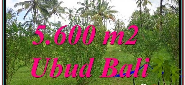 Magnificent PROPERTY 5,600 m2 LAND IN Ubud Tegalalang FOR SALE TJUB609
