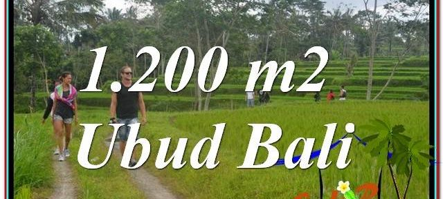 FOR SALE Affordable PROPERTY LAND IN Ubud Tegalalang BALI TJUB624