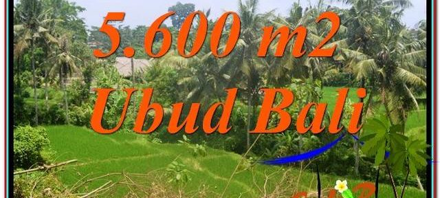 Beautiful 5,600 m2 LAND IN UBUD BALI FOR SALE TJUB636