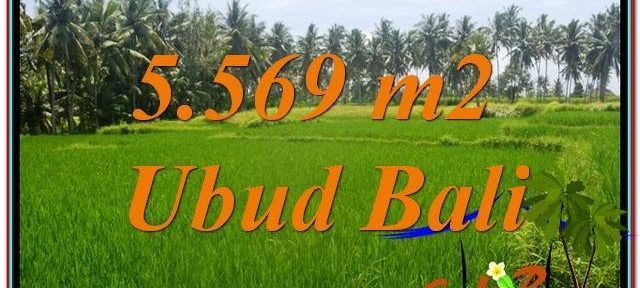 Beautiful PROPERTY UBUD LAND FOR SALE TJUB642