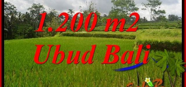 Affordable Property 1,200 m2 Land sale in Ubud Tegalalang TJUB693