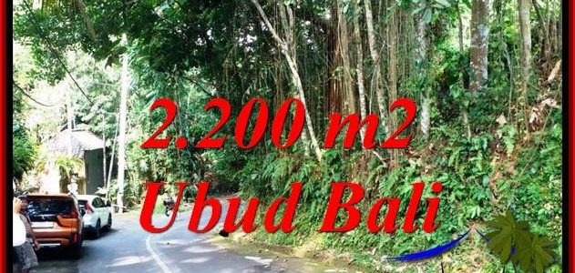 FOR SALE Affordable PROPERTY 2,200 m2 LAND IN SENTRAL UBUD TJUB768