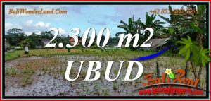 Magnificent PROPERTY 2,300 m2 LAND for SALE in UBUD TJUB813